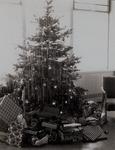 Christmas Tree, Stone Hall, 1960